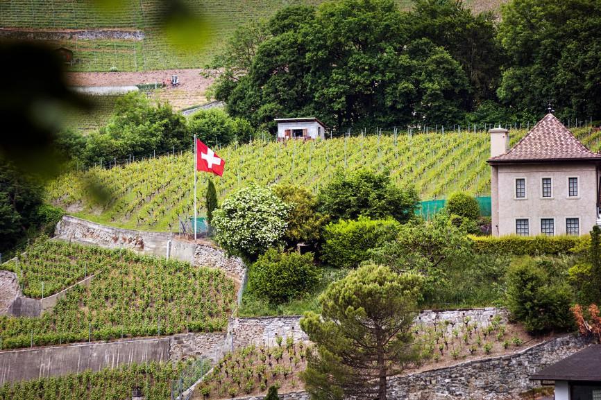 Wineyards near to the Lake Geneva